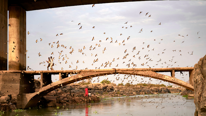 Swallows flying by a bridge over the River Niger, Bamako, Mali - Friday 30 April 2021