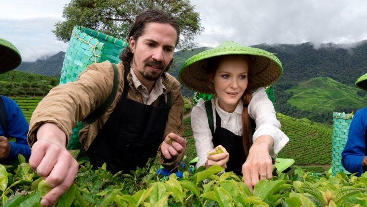 Darby Stanchfield picking tea leaves.