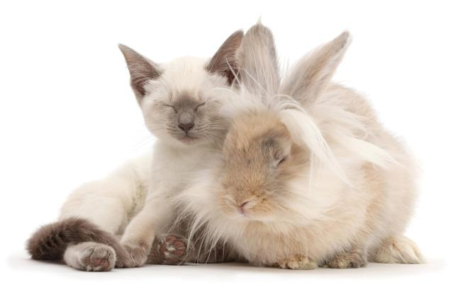 <p>Blue-point Birman-cross kitten dozing with fluffy bunny. (Photo: Warren photographic/Caters News) </p>