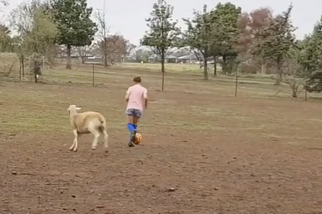 Rescued Sheep Plays Soccer With Girl on Drought-Hit Farm
