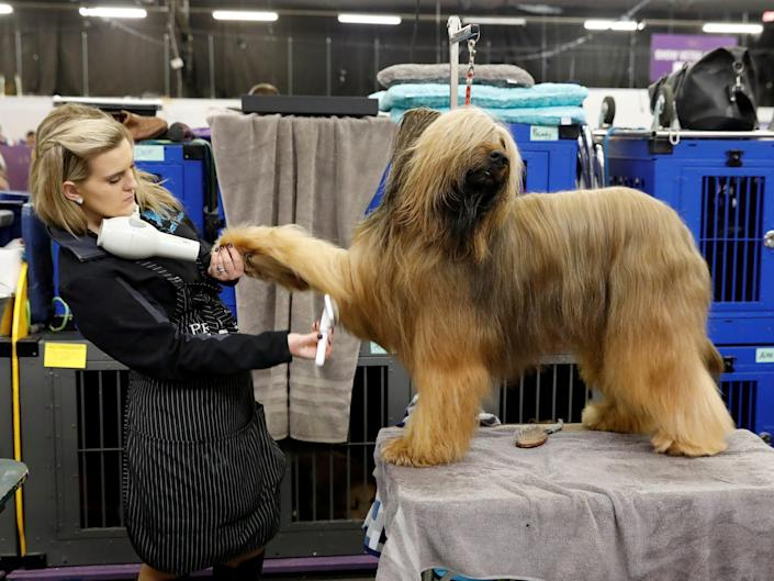 Jambo, a briard, gets a blow dry in 2018.