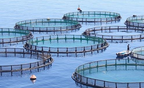 """<span class=""""caption"""">Increasing numbers of fish farms are receiving sustainability certifications.</span> <span class=""""attribution""""><a class=""""link rapid-noclick-resp"""" href=""""https://upload.wikimedia.org/wikipedia/commons/0/01/Fish-farm-hero.jpg"""" rel=""""nofollow noopener"""" target=""""_blank"""" data-ylk=""""slk:Wikimedia Commons"""">Wikimedia Commons</a></span>"""