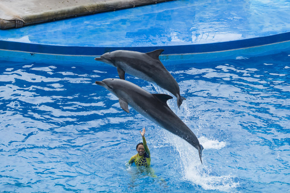 Dolphin Project urges tourists to avoid dolphinariums. Source: Getty