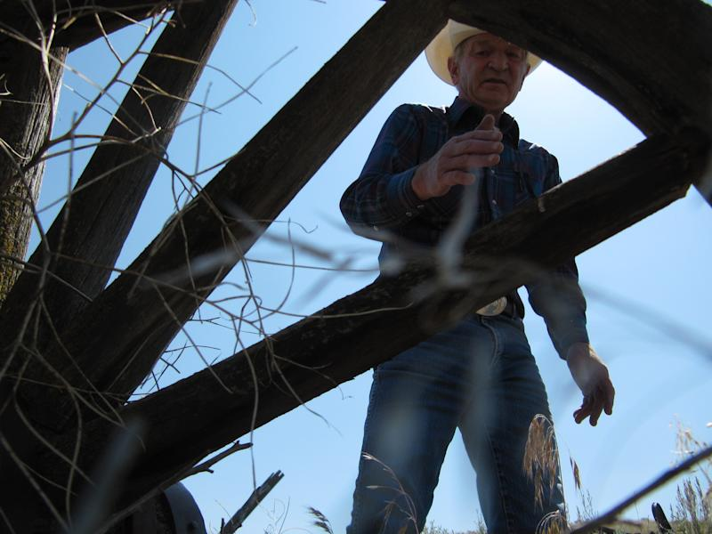 Max Benitz examines an old wagon at the McWhorter Ranch in Benton County, northeast of Prosser, Wash. on May 18, 2012. The descendants of the man who settled the ranch in 1903 are putting it up for sale, and Benitz is among those hoping its shrub-steppe habitat can be preserved. (AP Photo/Shannon Dininny)