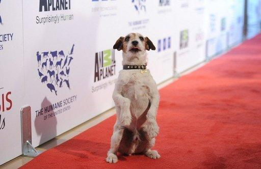 """""""Uggie -- my story"""" is due to be published by Simon & Schuster's Gallery Books in October"""