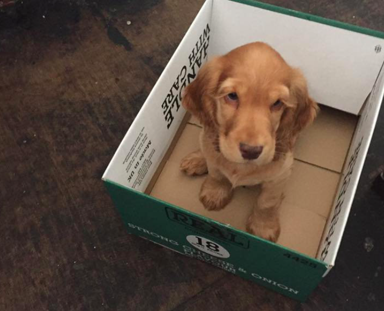 <em>The adorable puppy was also nominated for 'top pub dog' (SWNS)</em>