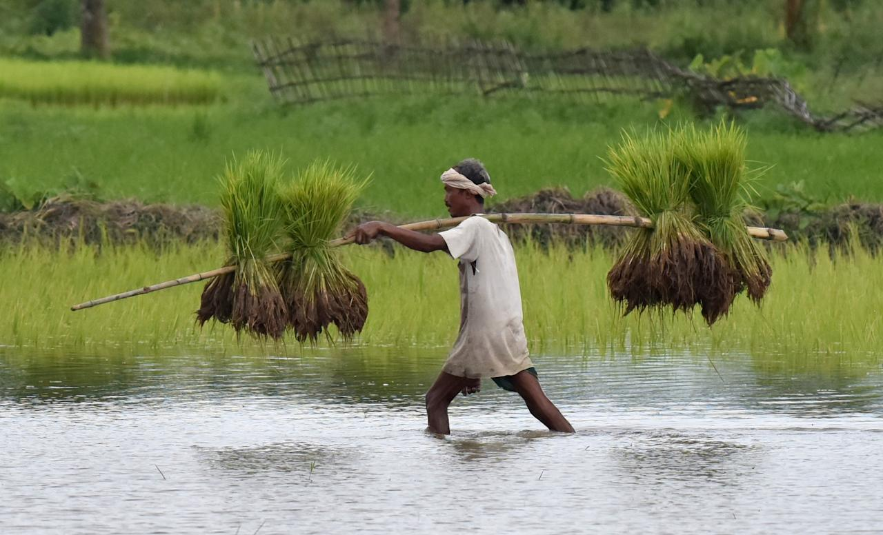 <p>Agriculture is the biggest water user, with irrigation accounting for 90% of global water consumption which is expected to increase furthermore globally. Photo – AFP </p>