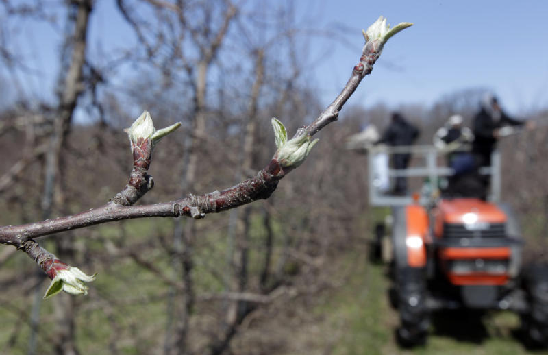 Farmers still checking for damage from cold snap