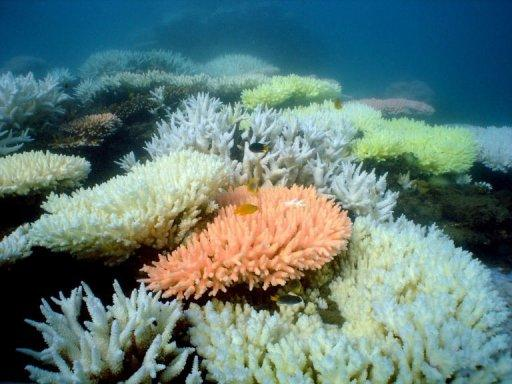 Bleaching on a coral reef at Halfway Island in Australia's Great Barrier Reef which lost more than half its coral cover in the past 27 years due to storms, poisonous starfish and bleaching linked to climate change, a study has found