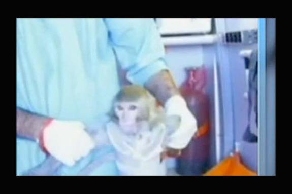 Iran May Launch Another Monkey Into Space Soon: Reports