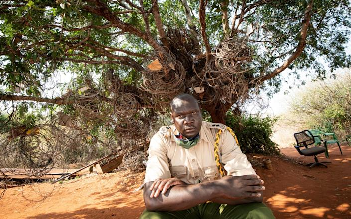 "Eric Sagwe, the 19-year veteran Chief Ranger in front of the ""tree of snares"" which holds thousands of illegal snares seized over the years in the Rukinga Wildlife Sanctuary near Tsavo - Simon Townsley"