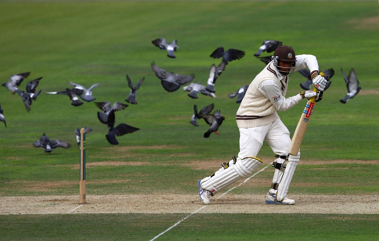 LONDON, ENGLAND - JULY 10:  Chris Jordan of Surrey plays a shot as pigeons fly around behind him during day one of the LV County Championship Division Two match between Surrey and Kent at The Brit Oval on July 10, 2009 in London, England.  (Photo by Julian Finney/Getty Images)