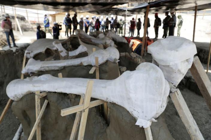 Mammoth bones are pictured at a site where archaeologists and workers of Mexico's National Institute of Anthropology and History (INAH) work at a site where more than 100 mammoth skeletons have been identified, in Zumpango