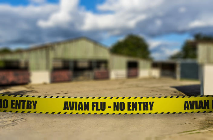 A 1km exclusion zone has been set up around the farm to limit the risk of the disease spreading. (Getty/stock photo)