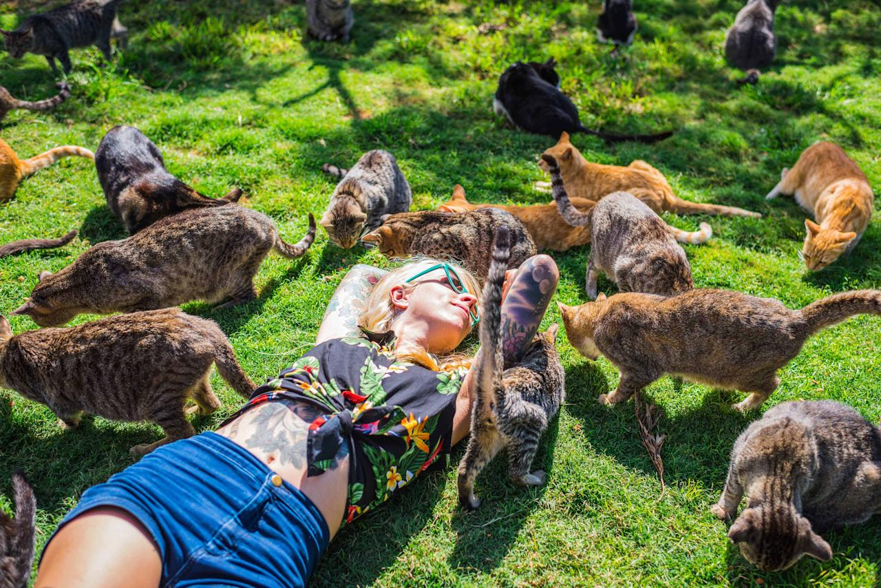 <p>Kitten Lady is surrounded by rescued cats at the the Lanai Cat Sanctuary in Hawaii. (Photo: Andrew Marttila/Caters News) </p>