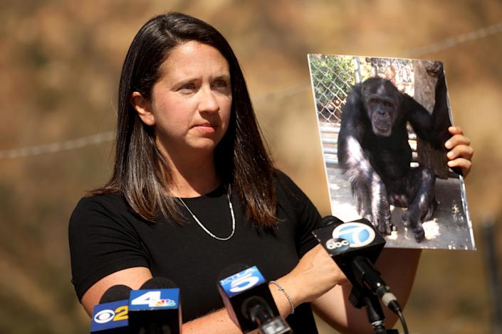 "Erika Fleury, with North American Primate Sanctuary Alliance, holds a photo of Jeff, one of the chimpanzees at Wildlife Waystation. <span class=""copyright"">(Genaro Molina / Los Angeles Times)</span>"