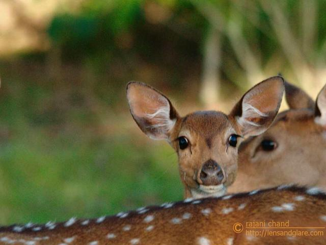 <b>Hiding behind Mom </b><br><br>The title says it all!