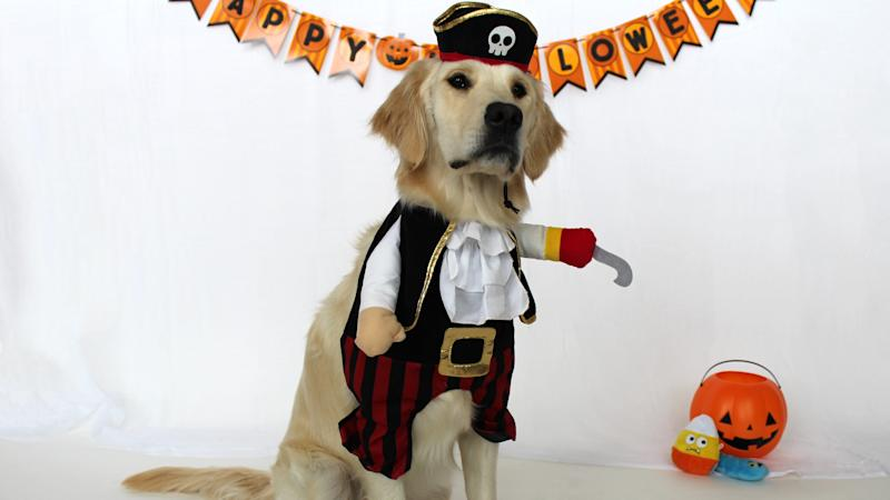 You don't want to cross this wily pirate!
