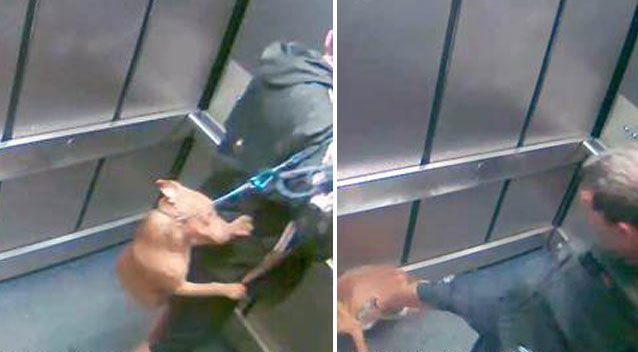 Grant Haggart attacked the dog out of frustration. Source: RSCPA NSW