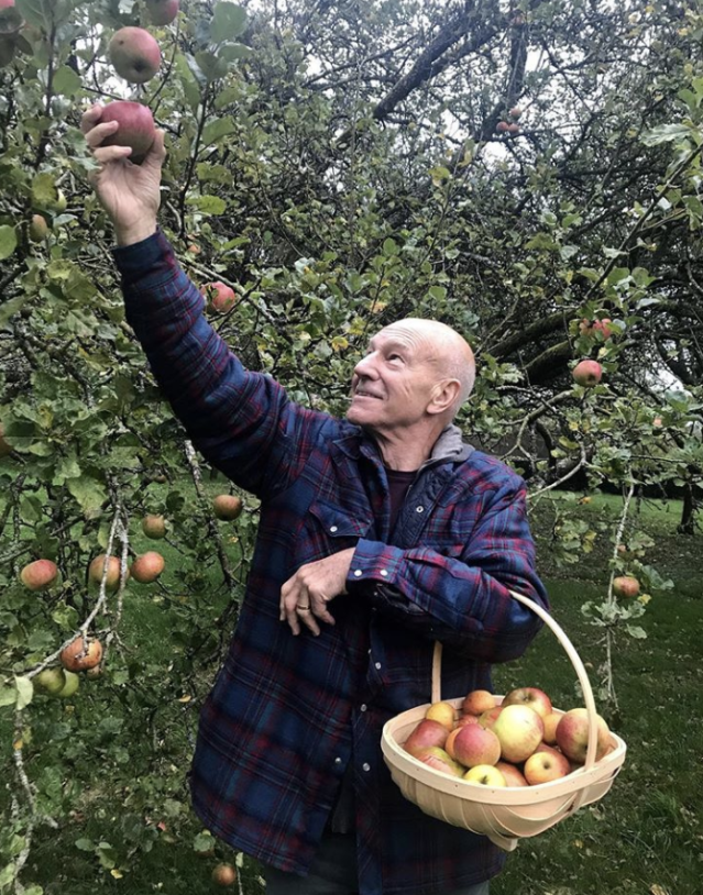 """<p>Just call him the OG of apple picking! """"I've been picking apples in the autumn since before it was cool to post about it on Instagram,"""" the veteran actor joked as he added to his basket of fruit. (Photo: <a href=""""https://www.instagram.com/p/BajumDoDwN5/?taken-by=sirpatstew"""" rel=""""nofollow noopener"""" target=""""_blank"""" data-ylk=""""slk:Patrick Stewart via Instagram"""" class=""""link rapid-noclick-resp"""">Patrick Stewart via Instagram</a>) </p>"""