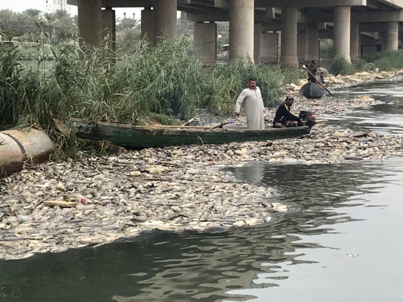 FILE - In this Saturday, Nov. 3, 2018 file photo, dead carp float in the Euphrates River, near the town of Hindiyah, 80 kilometers (50 miles) south of Baghdad, Iraq. The World Health Organizations said Tuesday, Nov. 20, 2018 that laboratory tests completed after a shocking fish die-off in Iraq's Euphrates River show the water is contaminated with high levels of bacteria, heavy metals, and ammonia. (AP Photo/Ali Abdul Hassan, File)