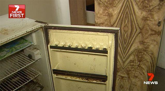 Cockroaches can be seen almost everywhere. Source: 7 News