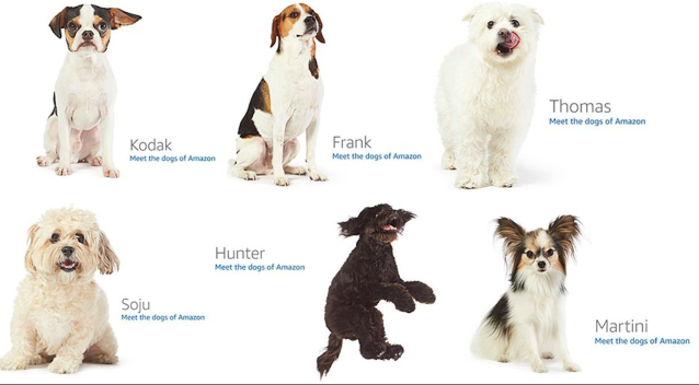 The dogs on Amazon's 404 image.