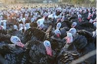 "<p>The debate over whether a free-range or frozen <a href=""https://www.goodhousekeeping.com/health/a41426/dont-wash-turkey/"" rel=""nofollow noopener"" target=""_blank"" data-ylk=""slk:Thanksgiving turkey"" class=""link rapid-noclick-resp"">Thanksgiving turkey</a> was the better option raged on in '98. The jury's still out on whether one is empirically better, but this was the moment when Americans really began asking questions about where their dinner was coming from.</p>"
