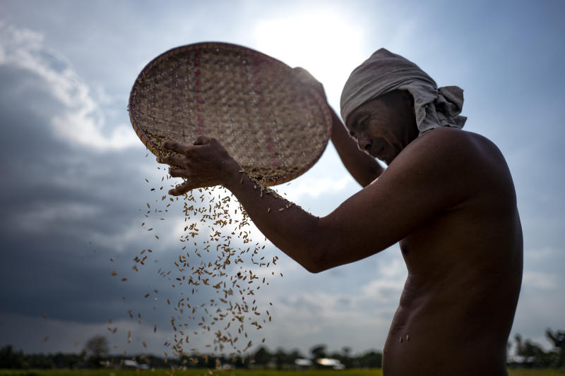 A farmer sun-drying his rice harvest on August 23, 2018 in Mamasapano, Maguindanao, southern Philippines. (Photo: Getty Images)