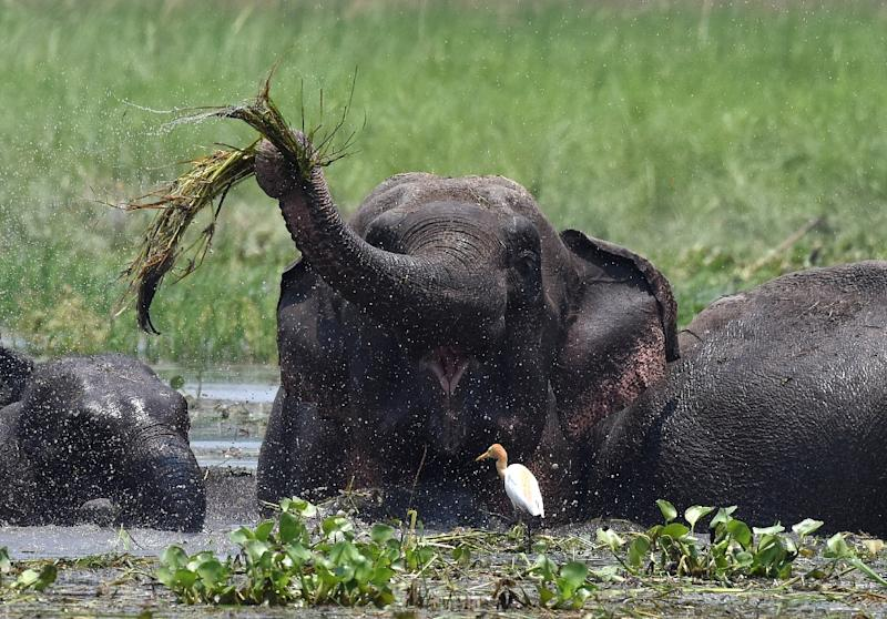 Elephant that killed 15 people in Jharkhand and Bihar shot dead