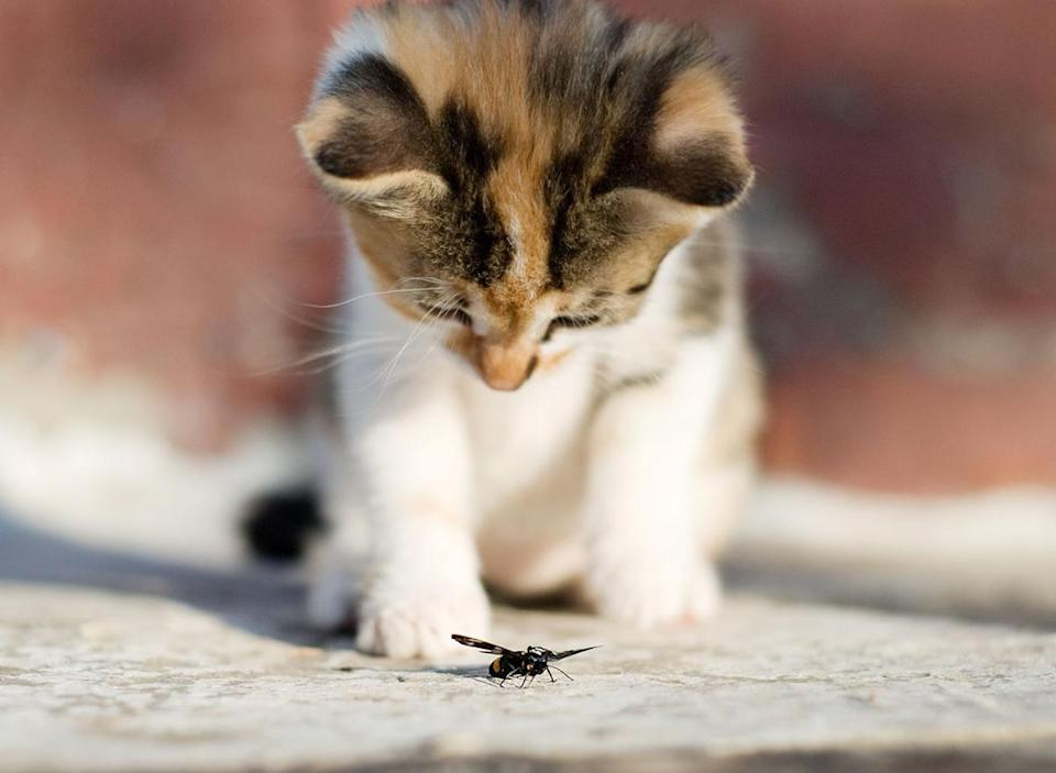 insect cat food