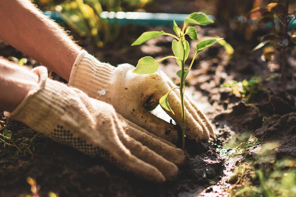 """""""Just putting your hands in the dirt can help one to feel grounded, which many of us do not feel when we are anxious and overwhelmed,"""" one expert tells Yahoo Life (Credit: Getty)"""