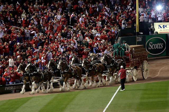ST LOUIS, MO - OCTOBER 20: The Budweiser Clydesdales circle the field prior to Game Two of the MLB World Series between the Texas Rangers and the St. Louis Cardinals at Busch Stadium on October 20, 2011 in St Louis, Missouri. (Photo by Rob Carr/Getty Images)