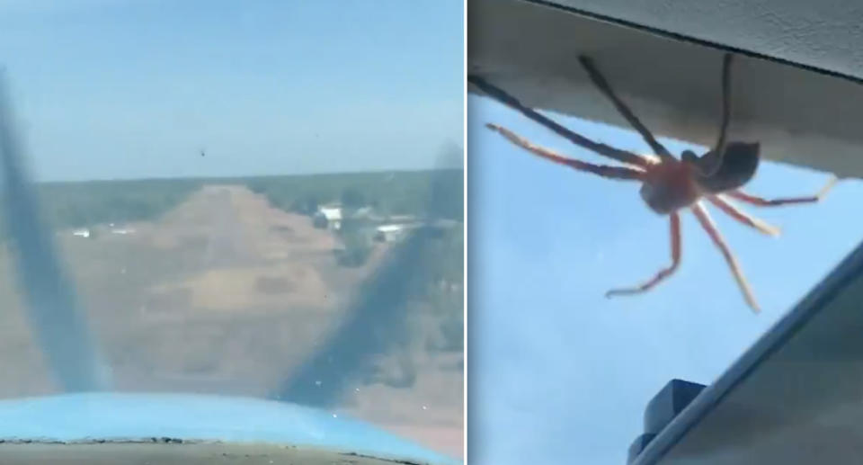 A huge huntsman crawls along the window of a plane landing in the northern territory.