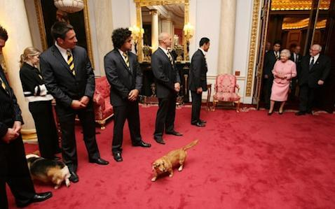 <span>A corgi passes between two rugby players in 2007 when The Queen greeted internationals </span> <span>Credit: Tim Graham Picture Library/Getty </span>