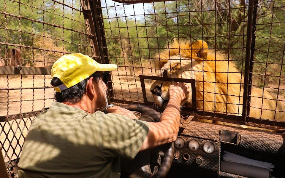isitors attend tours in a caged land vehicle to visit Ranch de Bandia Lion and Nature Park in Nguekhokhe, 70 kilometers away from Dhakar, Senegal
