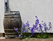 <p>If you have a garden, set up a rain barrel outside to water the plants with. You can also set up a bucket in your shower to collect excess water, then take it outside for your daily watering, or use the leftover water in your pet bowls to water your plants before you refill them!</p>