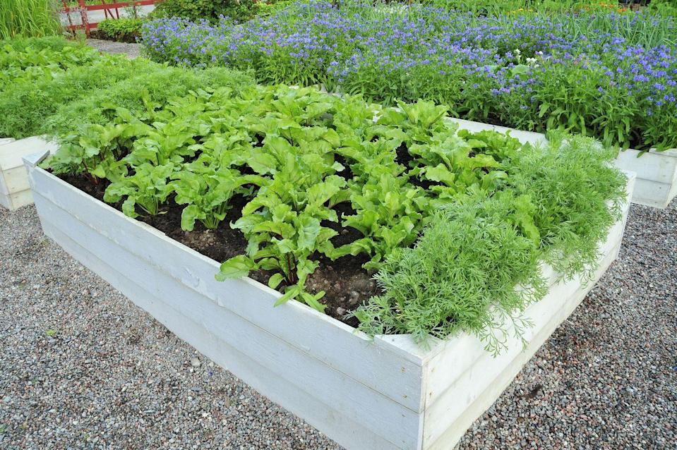 <p>Offset lush green plants with a light-colored wood box for visual interest.</p>