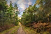 """<p>Located near Tunbridge Wells, the Forest is an ancient woodland that was once part of one of the medieval forests of the Sussex High Weald. </p><p>Fallow and roe deer inhabit the area making it the perfect place to stretch your legs and feel at one with nature. </p><p>A series of footpaths cross through the area, our favourite being the <a href=""""https://osmaps.ordnancesurvey.co.uk/route/142323/medway-upstream"""" rel=""""nofollow noopener"""" target=""""_blank"""" data-ylk=""""slk:Medway Upstream"""" class=""""link rapid-noclick-resp"""">Medway Upstream</a> (5.3km) and the more adventurous <a href=""""https://osmaps.ordnancesurvey.co.uk/osmaps/route/208325"""" rel=""""nofollow noopener"""" target=""""_blank"""" data-ylk=""""slk:Bigborough Run"""" class=""""link rapid-noclick-resp"""">Bigborough Run</a> (12.7km). </p><p><strong>Distance from London</strong>: 45.8 miles.</p><p><strong>How to get there</strong>: London to Hargate Forest via the A2 in the car (1hr 38 min).</p>"""