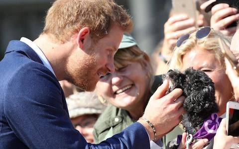 Prince Harry pets a dog as he greets the crowds leaving The Centre for Addiction and Mental Health  - Credit: Getty