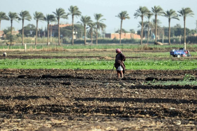 Most people survive on hardscrabble agriculture, growing mostly maize and wheat, here in Assiut province, Egypt's poorest (AFP Photo/Mohamed el-Shahed)