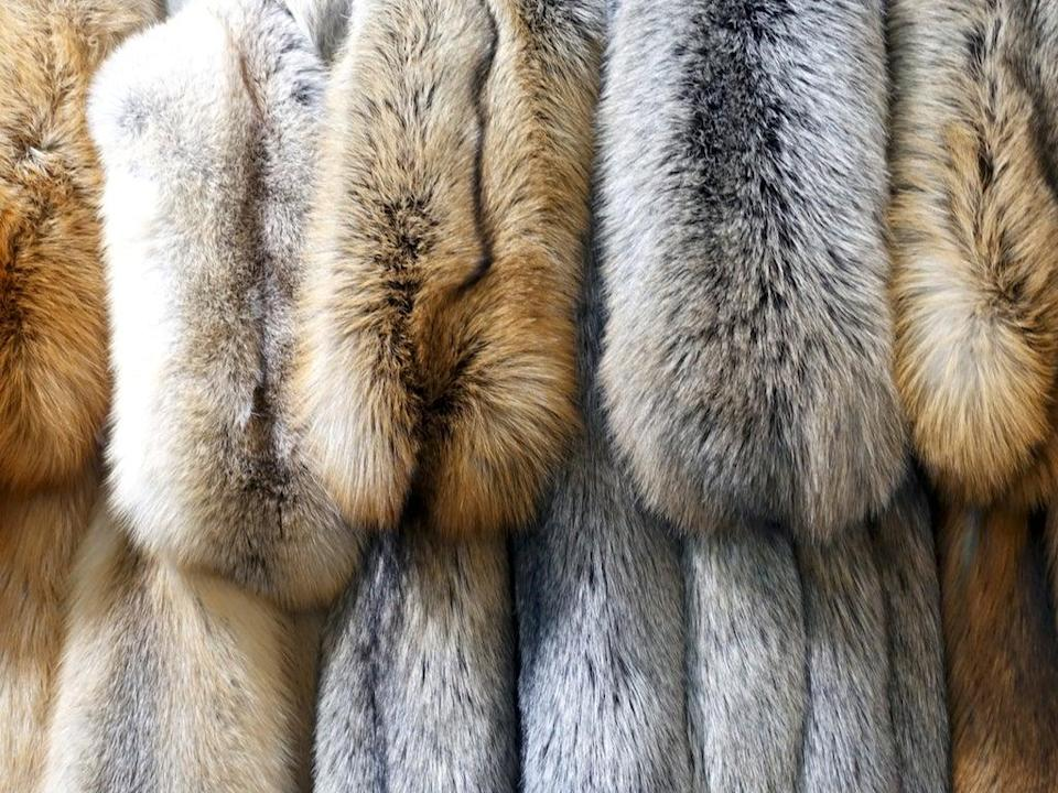 A selection of furs (Getty Images/iStockphoto)
