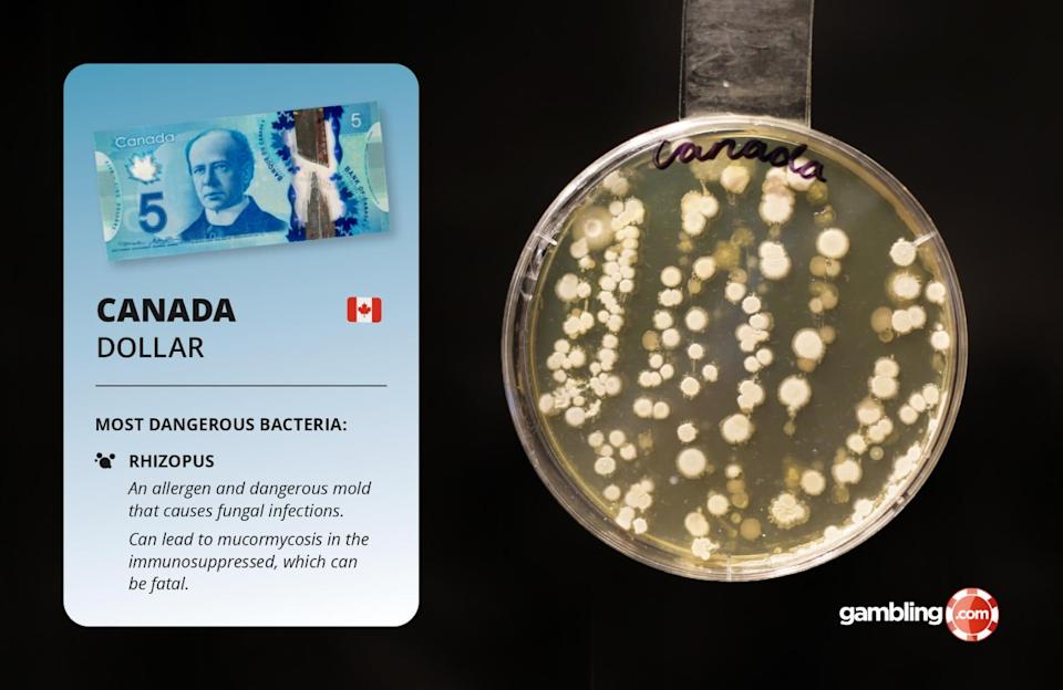 The study revealed that the Canadian dollar was the dirtiest and most dangerous banknote in the world, with 209 microbe colonies discovered. Picture: gambling.com