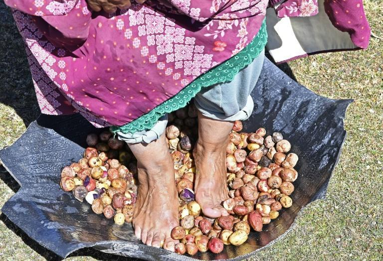 A woman stomps on potatoes to begin the dehydration process of chuno in Machacamarca, Bolivia, on June 30, 2021