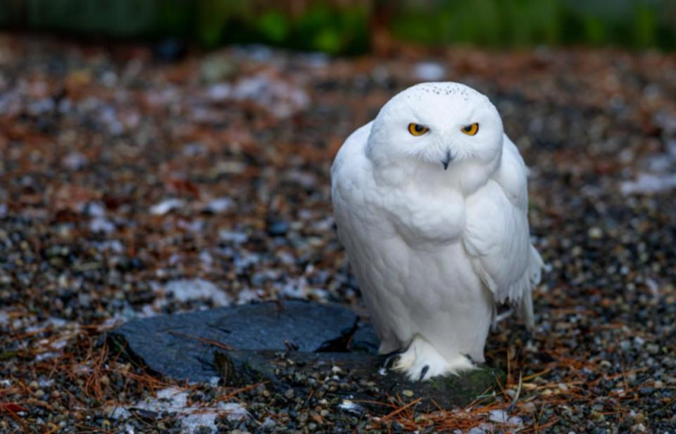 Harry Potter parks to stop using live owls in performances