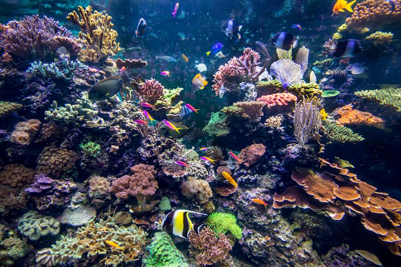 Underwater coral reef fish shoal landscape. Coral reef underwater world