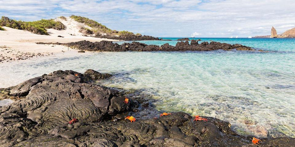 """<p>A perennial bucket-list destination for world travelers are the <a href=""""https://www.tripadvisor.com/Tourism-g294310-Galapagos_Islands-Vacations.html#"""" rel=""""nofollow noopener"""" target=""""_blank"""" data-ylk=""""slk:Galápagos Islands"""" class=""""link rapid-noclick-resp"""">Galápagos Islands</a>, off the coast of Ecuador. The islands, famously visited by naturalist Charles Darwin in 1835, are a remote volcanic chain in the Pacific Ocean where exotic wildlife outnumbers humans.</p><p>During a hike or a swim, you'll encounter many of the same animals Darwin did, including sea turtles, sea lions, and Sally Lightfoot crabs.</p>"""