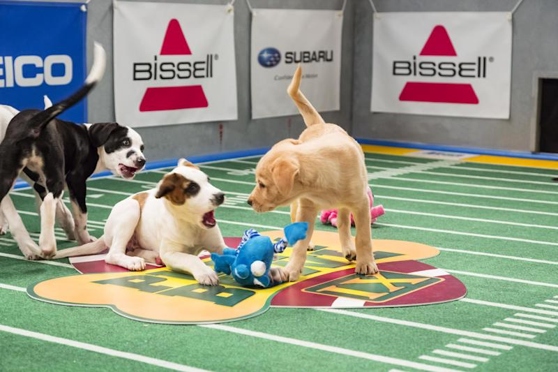 "This undated publicity photo provided by Animal Planet shows dogs playing on the field during ""Puppy Bowl IX,"" in New York. The ""Puppy Bowl,"" an annual two-hour TV special that mimics a football game with canine players, made its debut eight years ago on The Animal Planet. Dogs score touchdowns on a 10-by-19-foot gridiron carpet when they cross the goal line with a toy. (AP Photo/Animal Planet, Keith Barraclough)"