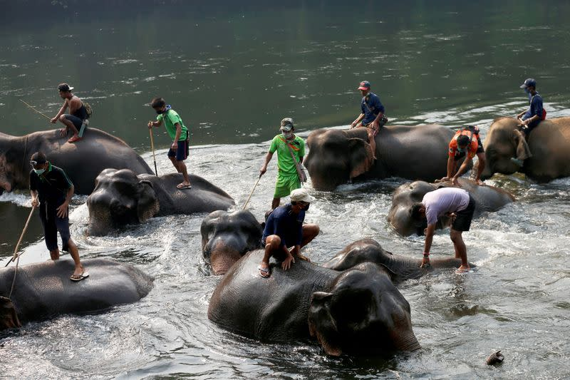 No work for Thailand's tourist elephants due nationwide lockdown