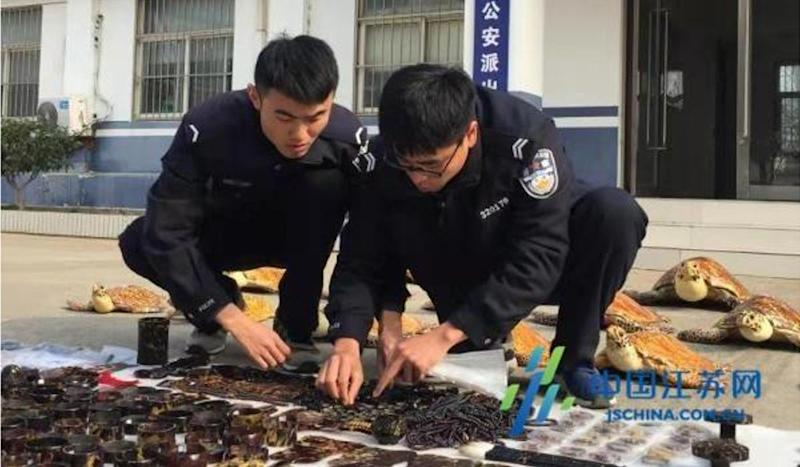 Chinese police seize turtle products, arrest 19 in black market crackdown